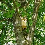 Яблоня или груша, вяз или клен в вашем саду и совершенно бесплатно